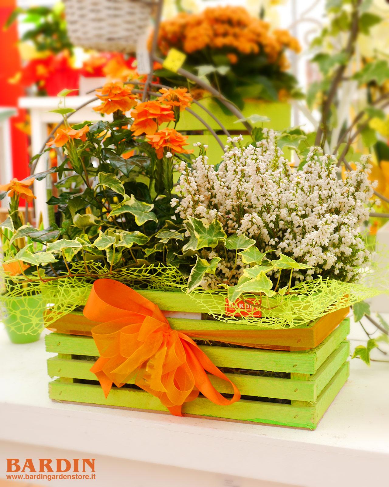 Creare Composizioni Per Natale confezionamento piante, realizzazione composizioni piante