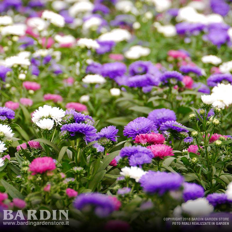 Vasi colorati per piante affordable la pianta carnosa ceramica vasi di fiori moderno - Piante vaso da esterno con fiori ...