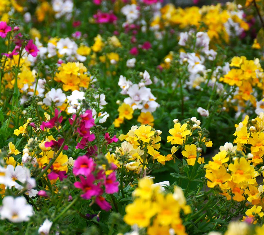 Fiori Da Giardino.Piante E Fiori Vendita Piante E Fiori Garden A Villorba Treviso