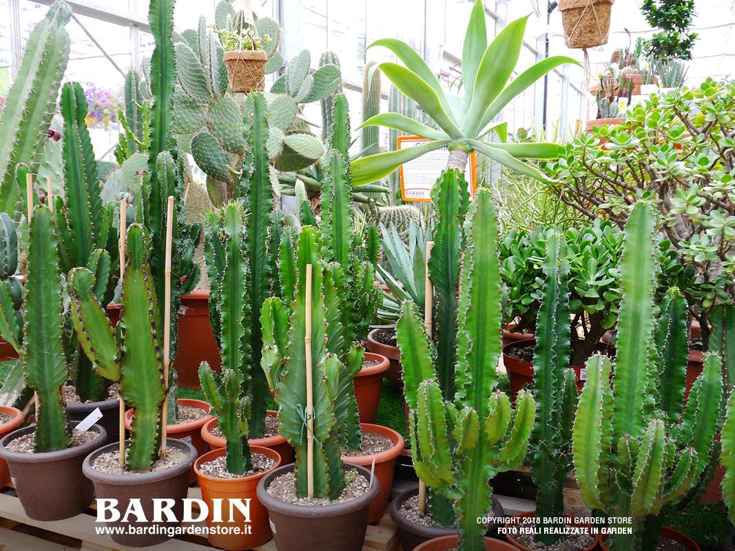 Piante Grasse Piccole Prezzi piante grasse - vendita da bardin garden store villorba treviso
