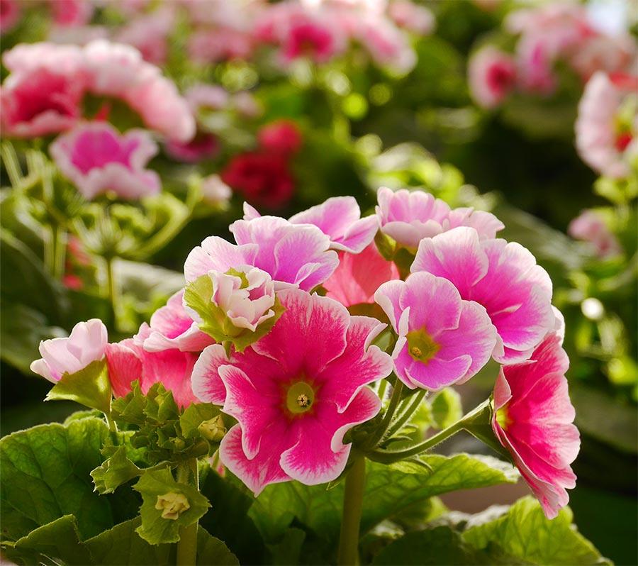 Piante e fiori vendita piante e fiori garden a villorba for Piante e fiori